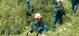 Những dòng máy nào thích hợp để cắt cỏ dại, cỏ mọc tự nhiên