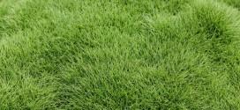 Những loại máy nào có thể cắt được cỏ Nhung Nhật, cỏ Lông Heo