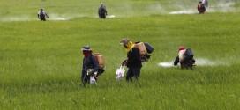 4 nguyên tắc bạn phải biết khi phun thuốc bảo vệ thực vật