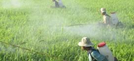 Những điều cần biết khi phun thuốc trừ sâu (thuốc bảo vệ thực vật)