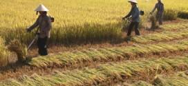 Cải tiến máy cắt cỏ thành máy cắt lúa hữu ích cho bà con